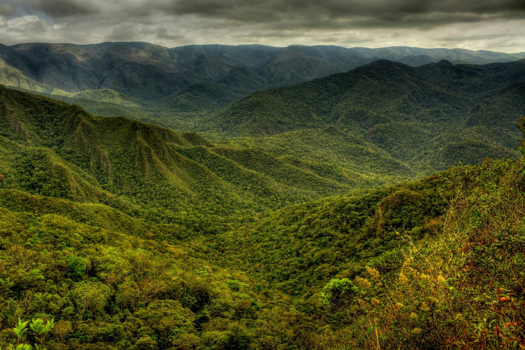 Dia da Mata Atlântica é lembrete para preservação da floresta