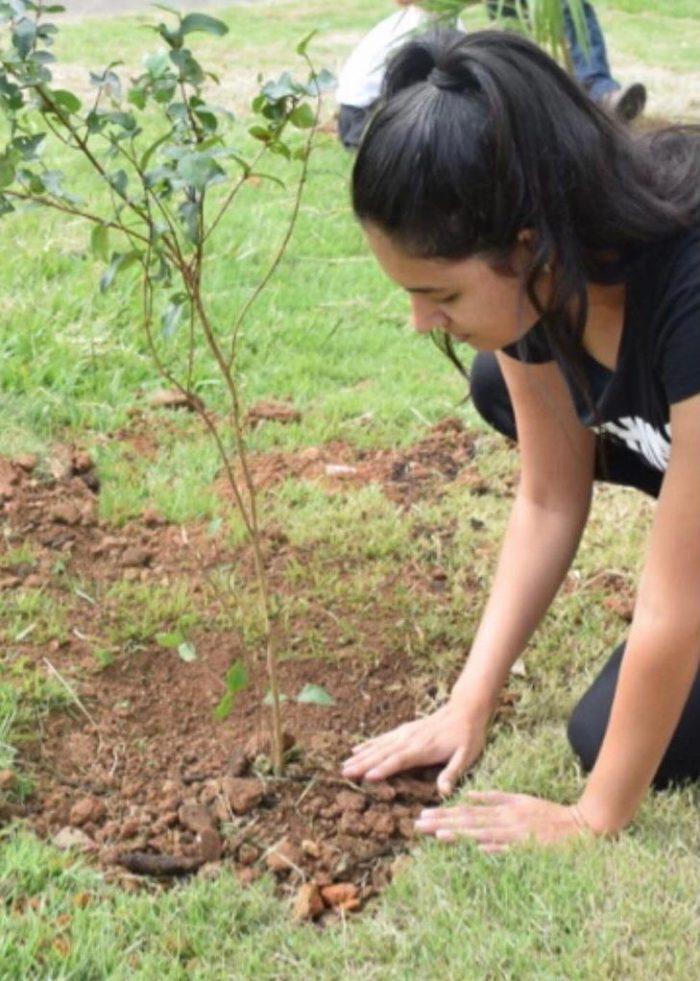 Plantar árvores: Natasha Freitas